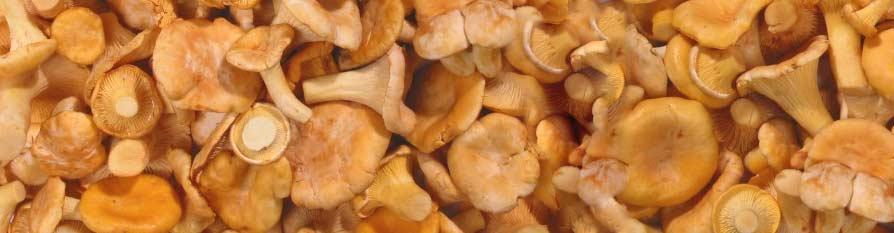 Bandi Foods Frozen Mushrooms